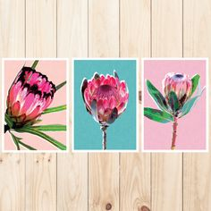 Enjoy the wonders of our Australian flora with this beautiful wall art set consisting of 3 individual prints. Included in the pack is Protea Pink; Protea Teal and Protea Peach. Split them up for a per. Protea Art, Botanical Prints, Floral Prints, Art Prints, South African Flowers, Triptych Wall Art, Ship Art, Wall Art Sets, Jewelry Art