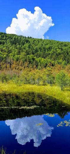 Mohos Peat Bog - walking on the water experiment - Traveling Romania Stories For Kids, Great Stories, Wooden Path, Water Experiments, Walk On Water, St Anne, Carnivorous Plants, Pine Forest, Small Plants
