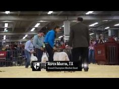 CEV Multimedia: Livestock Judging: Classes, Critiques & Reasons I DVD Lesson Preview - YouTube Livestock Judging, Show Goats, Ffa, Agriculture, Sheep, Youth, Barn, Teaching, Marketing