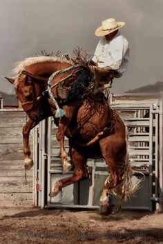 Will James Roundup, Ranch Rodeo, Ranch Bronc Riding, Hardin, Montana Cowboy Horse, Cowboy Art, Cowboy And Cowgirl, Rodeo Cowboys, Real Cowboys, Westerns, Bucking Bulls, Rodeo Events, Rodeo Time