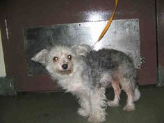 Maltese mix dog 2 yrs seized onholdhere hold for legal reason