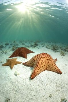 Beautiful underwater photo of Starfish