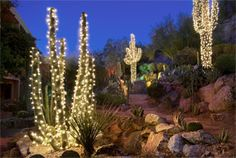 cactus garden the phoenician scottsdale christmas palm tree christmas deserts western christmas