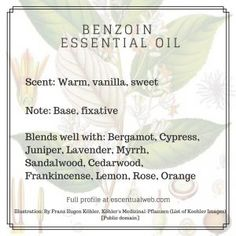 Learn more about the uses and benefits of benzoin essential oil with this profil Benzoin Essential Oil, Essential Oils 101, Essential Oil Scents, Young Living Essential Oils, Money Spells That Work, Perfume Recipes, Oil Benefits, Aromatherapy Oils, Fragrance Oil