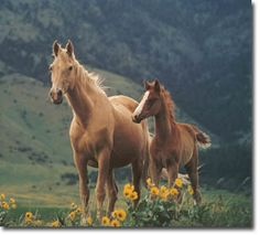 Montana Traveler Horses- I had this poster in my room as a little girl and it definitely worsened my horse fever!