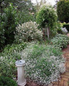 White garden w/ Clematis Paniculata and euphorbia Diamond Frost; Loi Thai, Tone on Tone