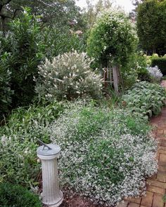 White garden w/ Clematis Paniculata and euphorbia Diamond Frost; Loi Thai, Tone on Tone