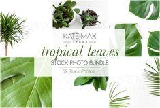 Tropical Leaves Stock Photo Bundle - Product Mockups