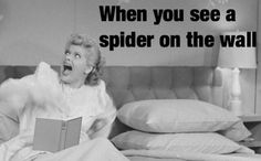When you see a spider on the wall. Haha Funny, Hilarious, Lol, I Love Lucy, My Love, Funny Quotes, Funny Memes, Funny Phrases, Funny Captions