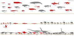 Megafauna size comparison chart by SameerPrehistorica.deviantart.com on @deviantART