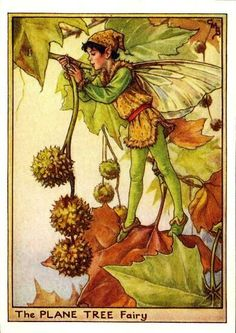 This beautiful Plane Tree Flower Fairy Vintage Print by Cicely Mary Barker was printed and is an original book plate from and early Flower Fairy book. Cicely Barker created 168 flower fairy illustrations in total for her many books. Cicely Mary Barker, Fairy Land, Fairy Tales, Arte Peculiar, Spring Fairy, Autumn Fairy, Kobold, Fairy Pictures, Vintage Fairies
