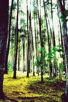 Juanda Forest Park, Bandung Indonesia