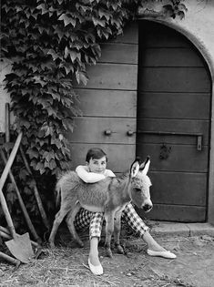 Audrey Hepburn with Bimba the Donkey at the Villa Rolli, Cecchina, 23 June, 1955 Baby Donkey, Cute Donkey, Mini Donkey, Audrey Hepburn, Farm Animals, Animals And Pets, Cute Animals, Miniature Donkey, Foto Poster
