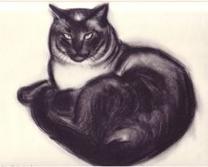 Malo | from CATS & KITTENS A PORTFOLIO, 1956 | by Clare Turlay Newberry