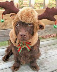 roupa para cachorro?! Dog Halloween CostumesDog ... & 10 Cute Pet Costumes | Pinterest | Pet costumes Giraffe and Costumes