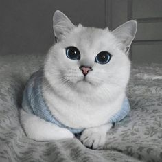 Cute Cats And Kittens, Kittens Cutest, Cute Funny Animals, Funny Cats, Animals And Pets, Baby Animals, Good Night Cat, Cute Animal Photos, White Cats