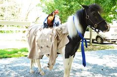 tem 76. In case the show needs cast replacements, dress up two barnyard animals like Supernatural characters (you may not harm the animals). #gishwhes