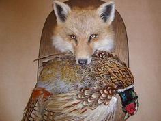 Taxidermy Fox Pheasant Wall Mount