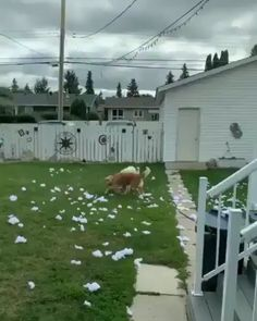 Dogs For Rescue By Vancouver Team 2019 - Rush Hour Rescue Huge Discounts On Diy Dog Costumes Funny Animal Memes, Funny Animal Pictures, Cute Funny Animals, Funny Cute, Funny Dogs, Animal Humor, Cute Puppies, Cute Dogs, Dogs And Puppies