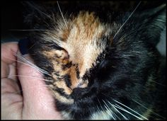 #Blessings and #Flashbacks http://wp.me/p45Cwv-174 #Life #Cats #DID #BPD #MentalHealth #Angels #Foreclosure