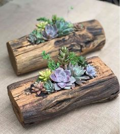 Unique pieces of decoration for your space from old tree stumps that will give personality in your interiors and. Succulent Planter Diy, Succulent Gardening, Diy Planters, Planting Succulents, Garden Crafts, Garden Projects, Garden Art, Garden Design, House Plants Decor