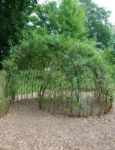 Living Willow workshop in November. Learn how to make this Arbour and a living willow sculpture http://www.rootsshootsandleaves.com/products-page/rural-skills-workshops/living-willow-structures-and-hedges/