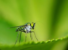 Insects Macro Photograph