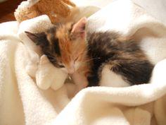 Gaïa bébichou 2 mois #chat #cat #chambredhote #bandb #cute #mignon #tarn #castelnaudemontmiral #gaillac http://lamaisonduchai.com/accueil.html