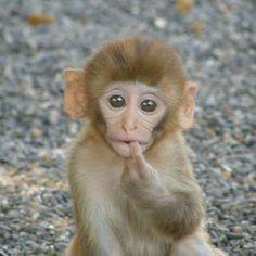 Baby monkey soooooooo cute