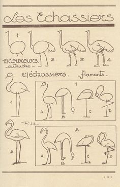 papertastebuds » Blog Archive » drawing guide : les animaux tels qu'ils sont
