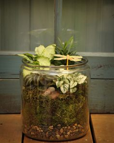 All about the differences in European and regular Dish Gardens and Terrariums.  As well as links to creating your own!  #Dish #Garden #European #Terrarium #DIY