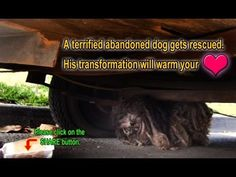 A terrified abandoned dog gets rescued. His transformation will warm you...