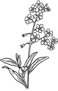forget me not black and white tattoos - Google Search