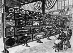Displays of fish. Philadelphia Centennial Exhibition 1876