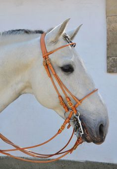 Horse Tack - Handmade Double Bridle from Oliveira Bridle.