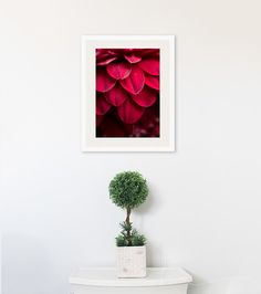 flower photograph red flower daisy petals rich colorful romantic seductive texture abstract print large wall art macro shades of red