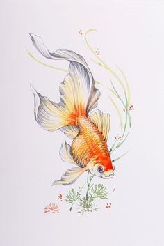 Goldfish - Watercolor Art Print by tiayartist Koi Fish Drawing, Fish Drawings, Animal Drawings, Art Drawings, Art Koi, Fish Art, Watercolor Animals, Watercolor Art, Watercolor Fish Tattoo