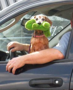 Headin' down the road with my human and my squeaky.  gotta smile :)