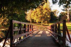 Wooden bridge over the Rye Water Weir in Maynooth, County Kildare, Ireland. Rye, Nature Photos, Garden Bridge, Fine Art America, Ireland, Nature Photography, Sidewalk, Outdoor Structures, Landscape