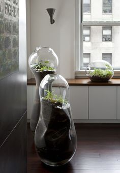 up-the-wolves:  Up The Wolves (via Handblown Glass Terrariums by Paula Hayes   OEN)