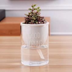 hydroponic self planter - Google Search Head Planters, Large Planters, Modern Planters, Succulent Pots, Planting Succulents, Glass Planter, Planter Pots, Ceramic Plant Pots, Glass Ceramic