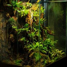 Terrarium with bromelias and orchids