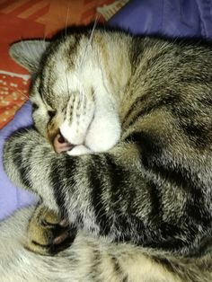 Sleep of Angels. Cute Baby Cats, Cute Cats And Kittens, Cute Funny Animals, Cute Baby Animals, Cute Babies, I Love Cats, Cute Tumblr Pictures, Cute Boyfriend Pictures, Beautiful Cats