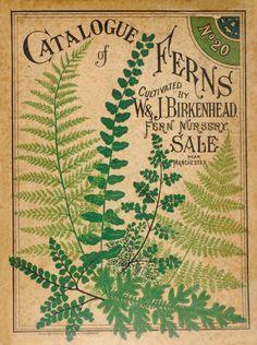 vintage botanical print