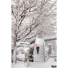 Snow in Harajuku Shibuya on Coming of Age Day 2013 Pictures Video ❤ liked on Polyvore featuring aesthetic and backgrounds