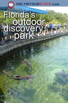 The Outdoor Discovery Park In Florida That's Perfect For A Family Day Trip Road Trip Florida, Florida Travel Guide, Places In Florida, Visit Florida, Florida Usa, Florida Vacation, Legoland Florida, Florida Living, Florida Beaches