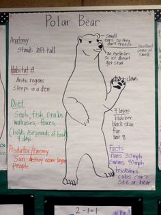 P is for polar bear Polar Bear Facts, Penguins And Polar Bears, Bear Facts For Kids, Polar Bears For Kids, Artic Animals, Wild Animals, Baby Animals, Bears Preschool, Preschool Winter