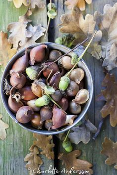 Acorn collecting- definitely doing this at my house... We've got a HUGE oak tree:)