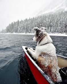 The perfect first mate. Rowing on the lake in the snow.