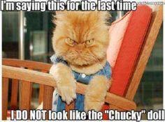 Chucky Doll Cat Meme | Slapcaption.com